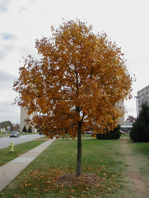 young, mature tree