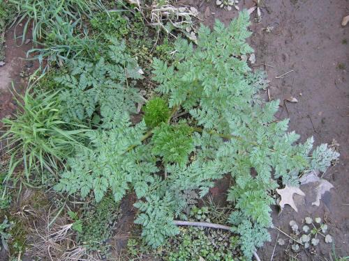 SymbionVAMVesicular Arbuscular MycorrhizaGlomus