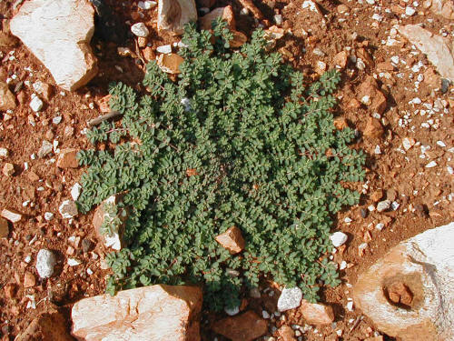 What Is The Best Way To Get Rid Of Weed Prostrate Spurge